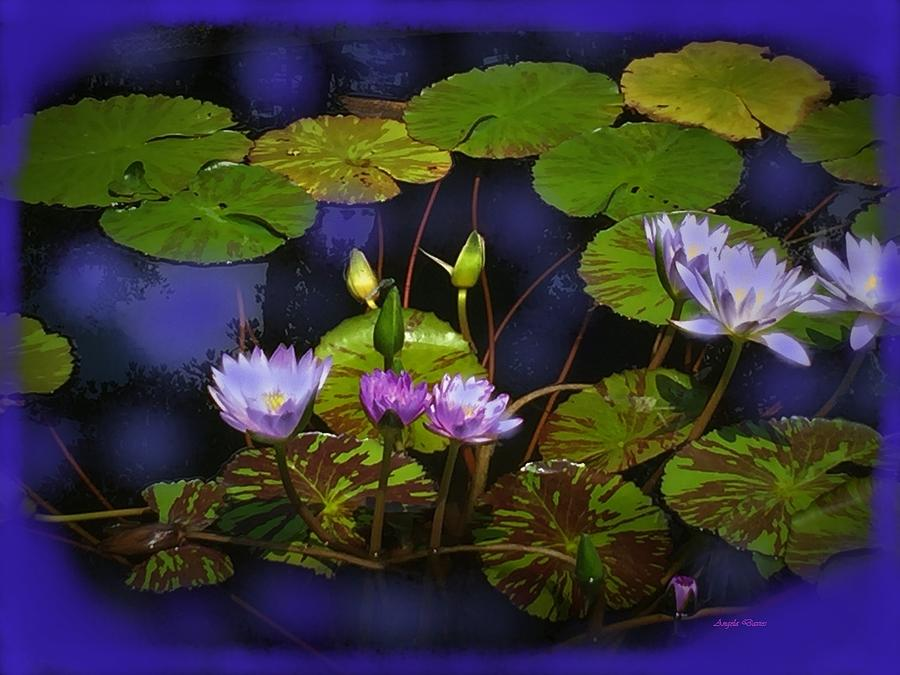 The Lily Pond by Angela Davies
