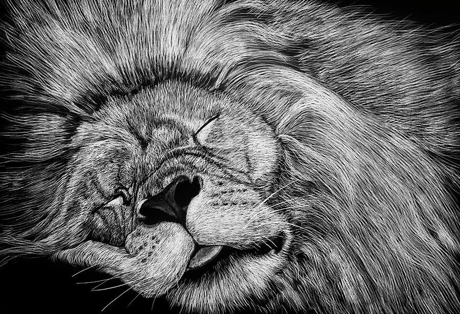 The Lion Sleeps Tonight by William Underwood