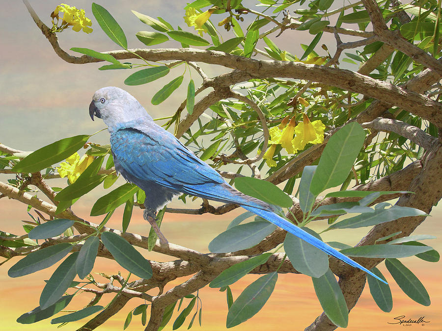 Little Blue Macaw by Spadecaller