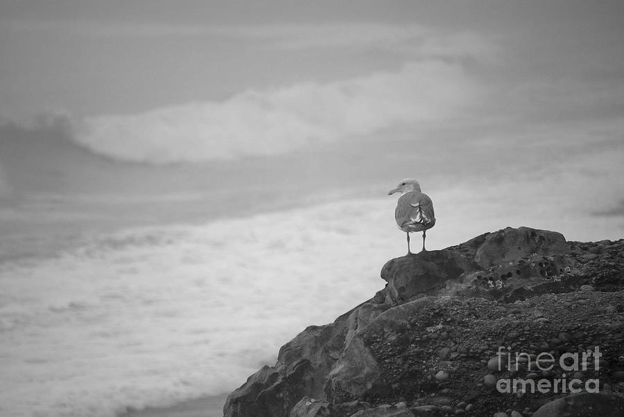 Seagulls Photograph - The Lone Gull by Jeni Gray