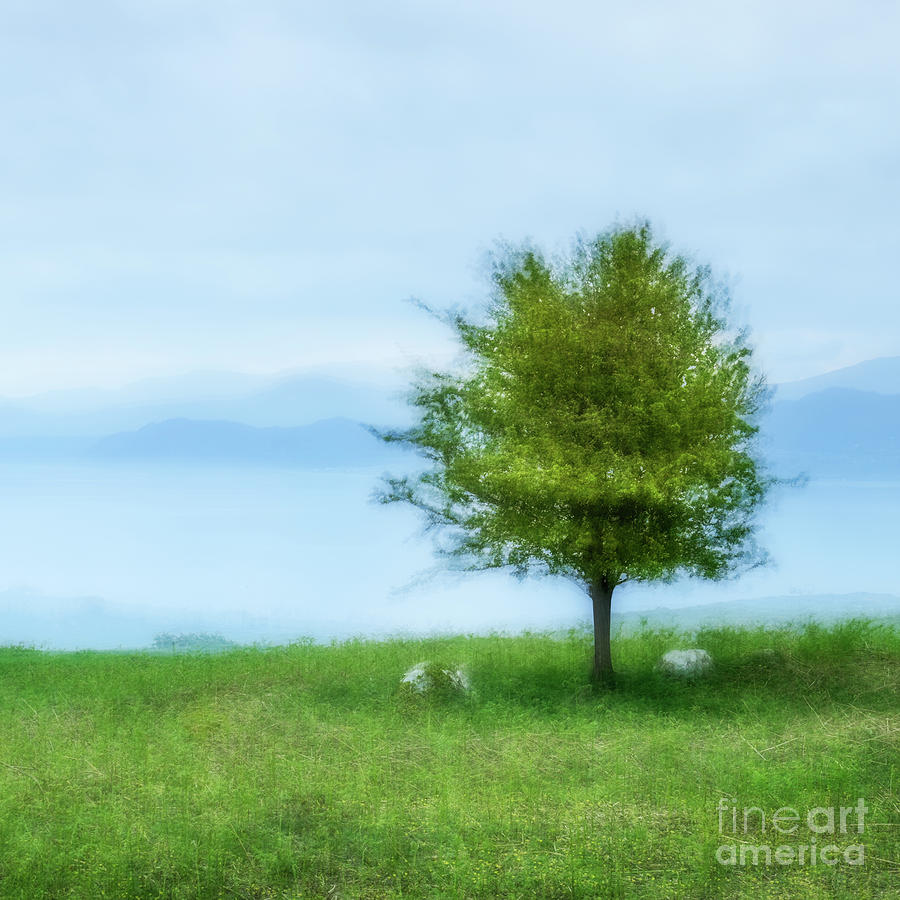 The Lone Tree by Janet Burdon