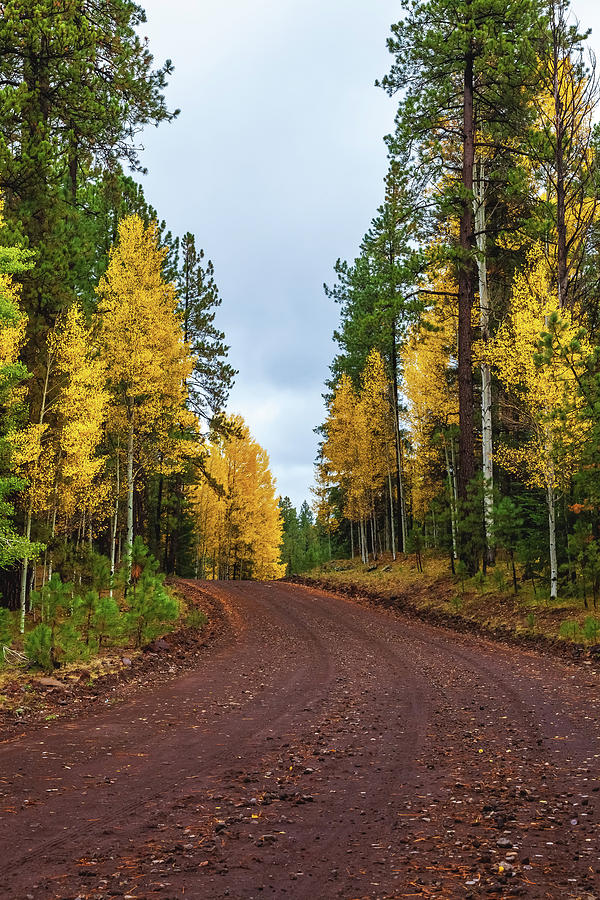 The Long and Winding Road by Rick Furmanek