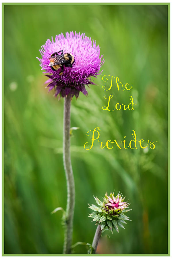 The Lord Provides  by Harriet Feagin