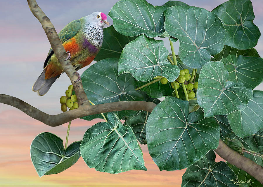 The Mariana Fruit Dove by Spadecaller