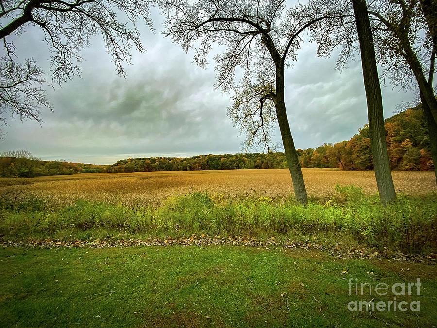 The Marshland by William Norton