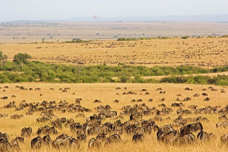 The Masai Mara Photograph by Wldavies
