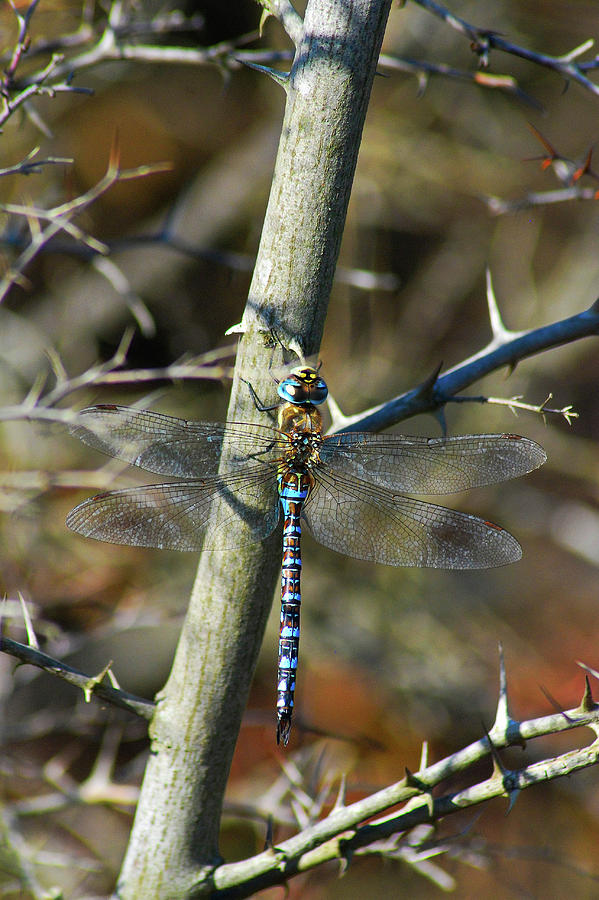 The Migrant Hawker by Darren Weeks