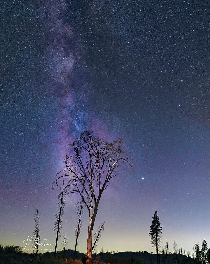 Astrophotography Photograph - The Milky Way And A Tree by Jim Thompson