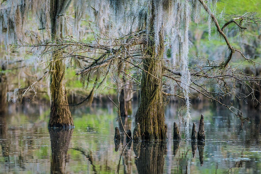 The Mill Pond On Caddo Lake by David Downs