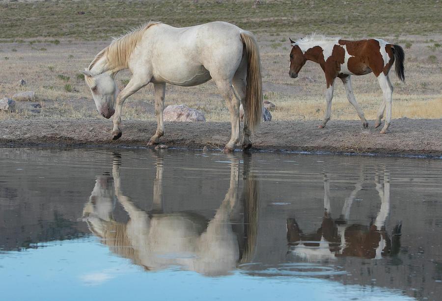 The Mirror by Kent Keller