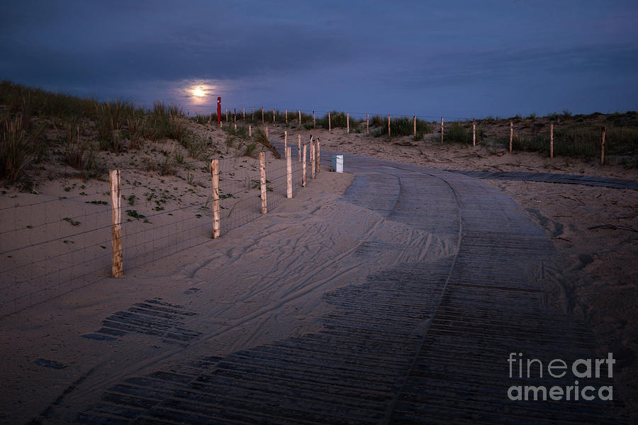 the moon lights my way by Hannes Cmarits