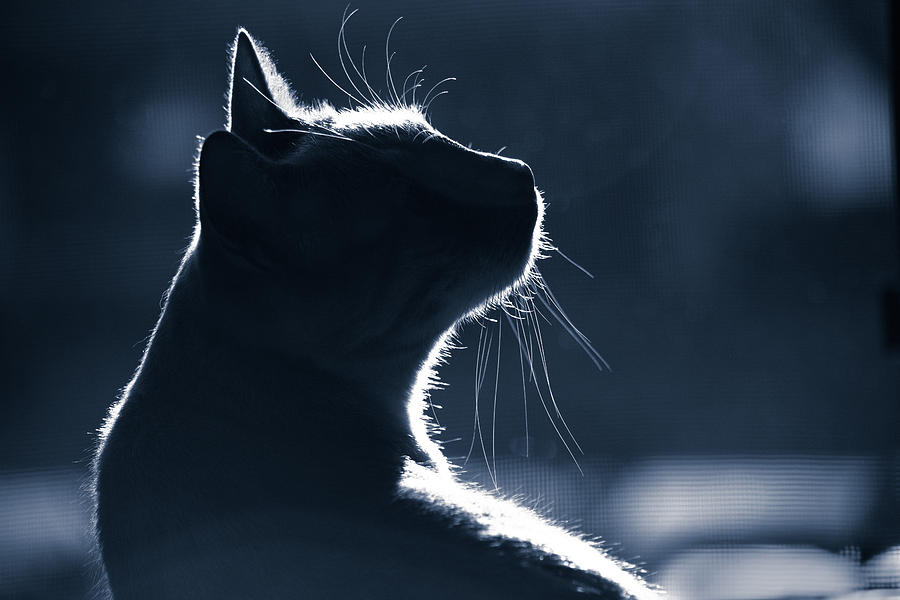 The Mystery of Cats by Rick J Brown