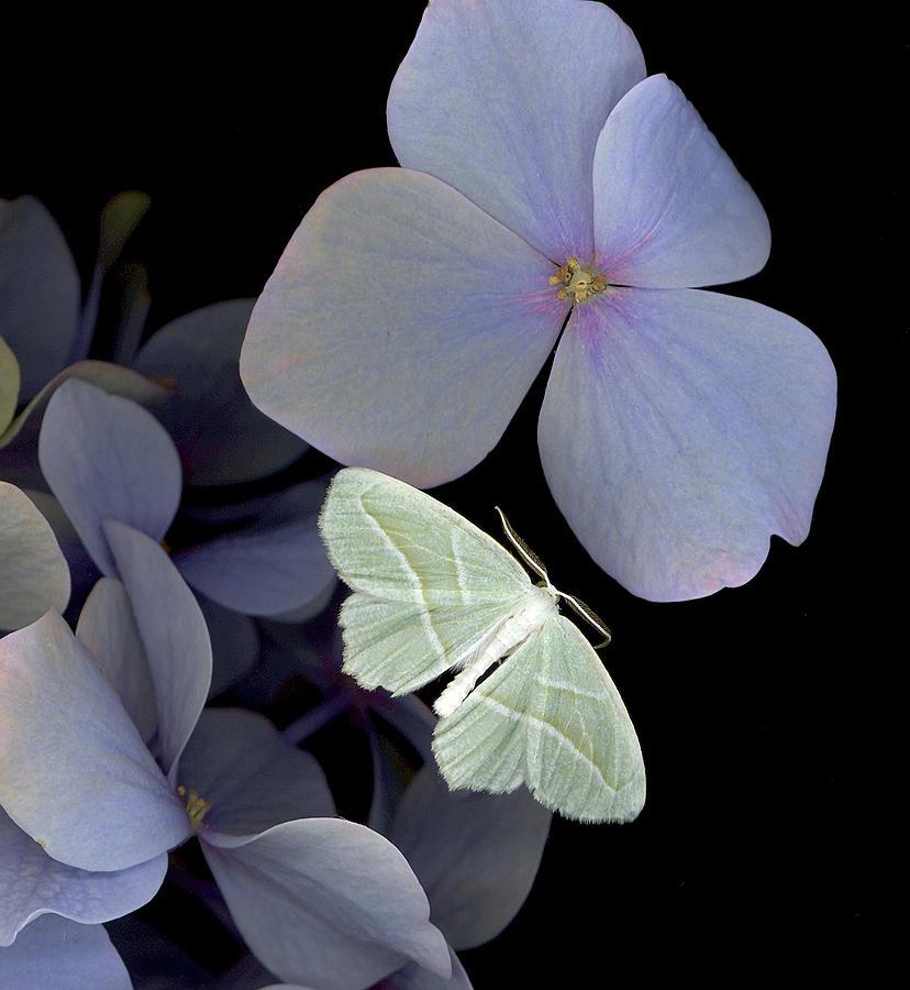 The Night Moth Photograph by Sandi F Hutchins
