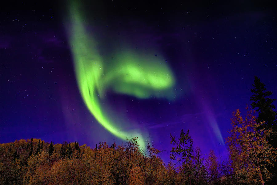 The Northern Lights Alaska by Michael Rogers