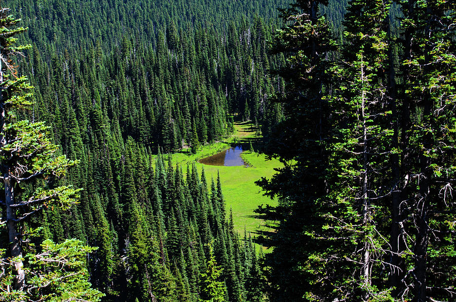 The Northwest Forest by Tikvah's Hope