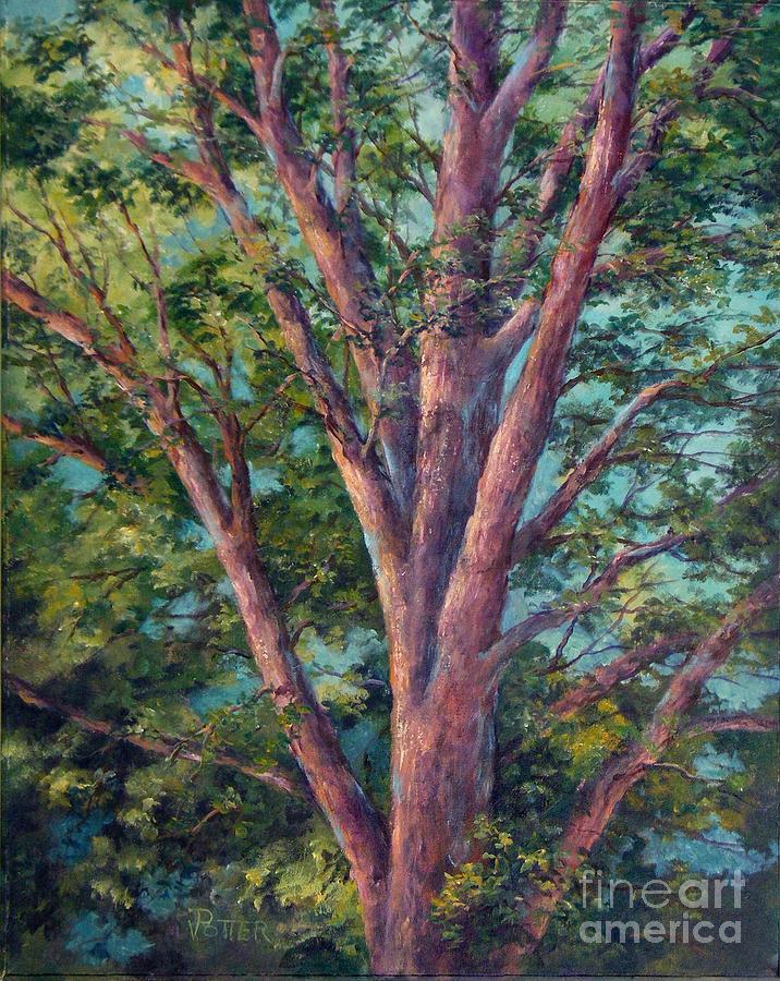 The Oak Tree by Virginia Potter