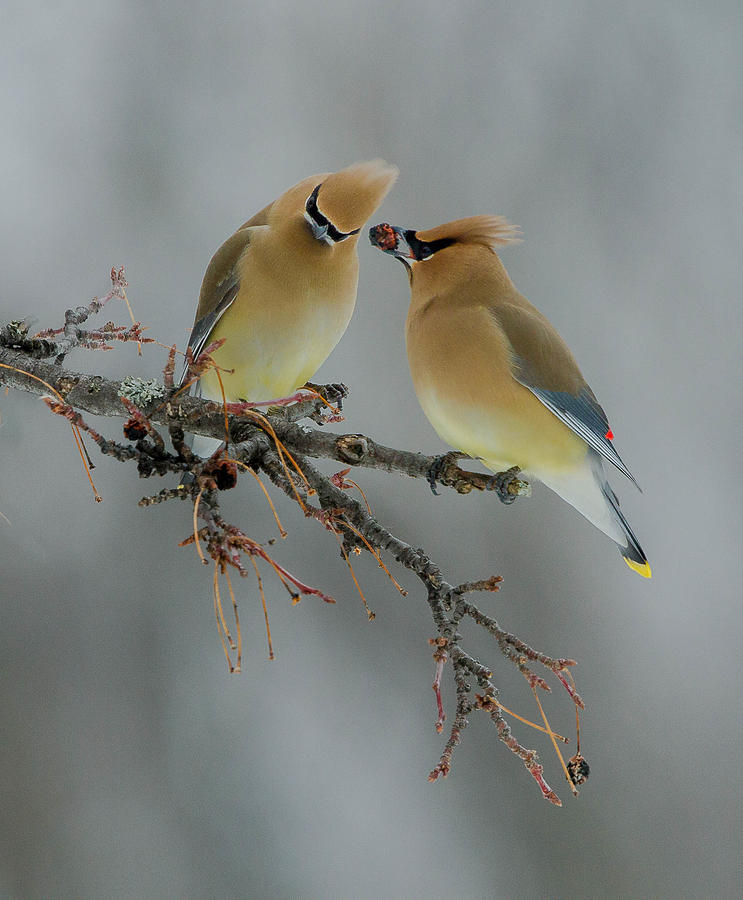 Birds Photograph - The Offering by Rick Tomalty