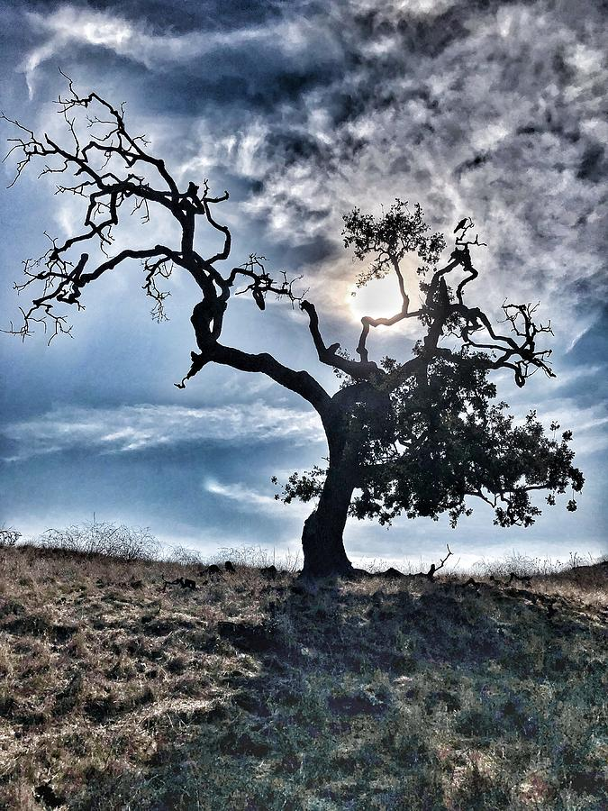 Oak Tree Photograph - The Old Oak II by John Rodrigues