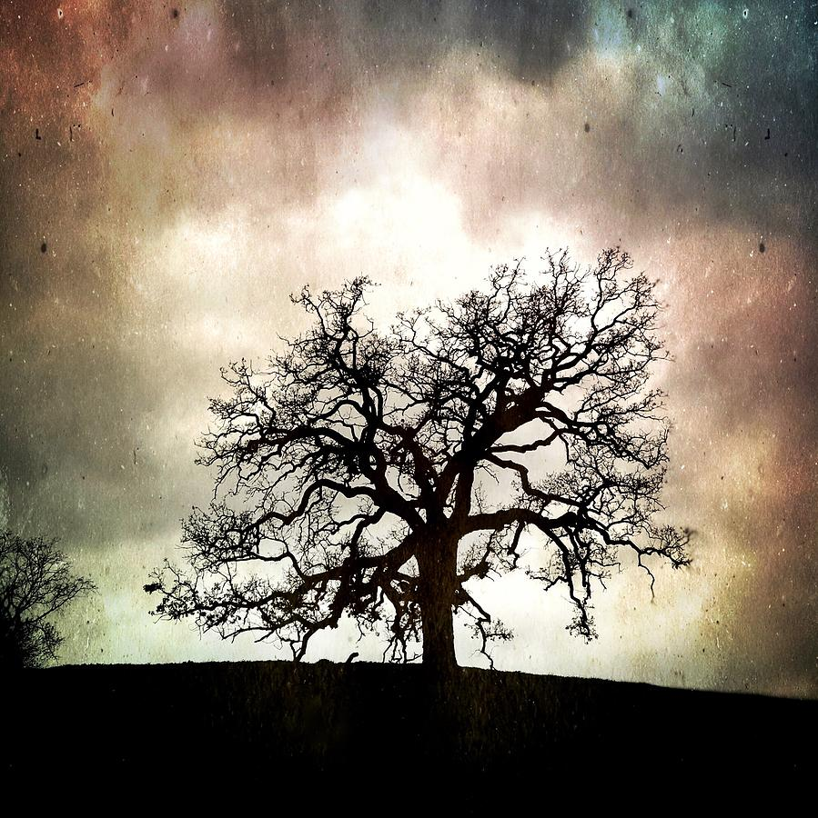The Old Oak III by John Rodrigues