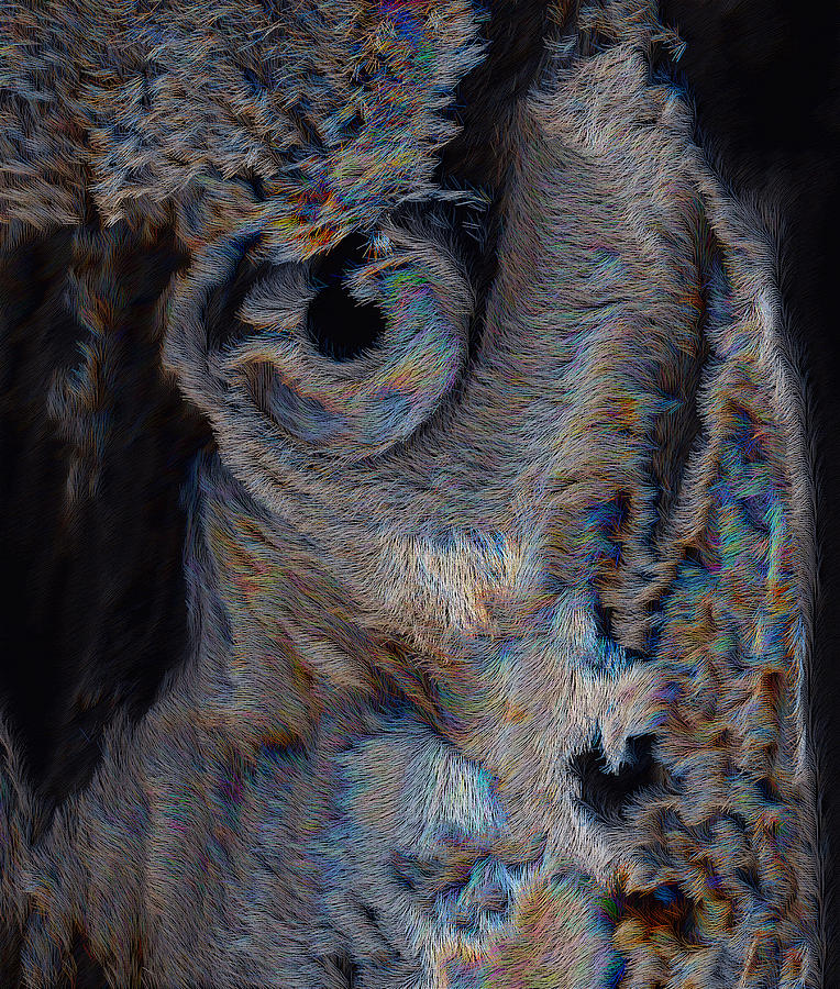 The Old Owl That Watches Digital Art