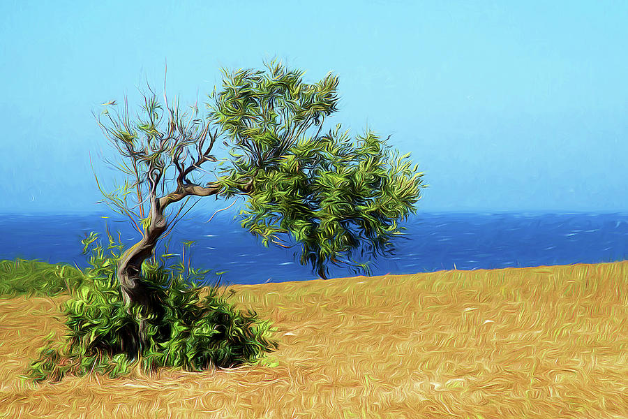 The olive tree by Gaye Bentham