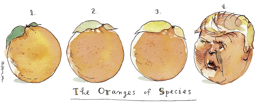 The Oranges Of Species Painting by Barry Blitt