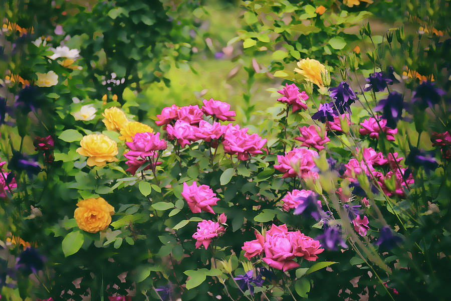 Roses Photograph - The Painted Garden by Jessica Jenney