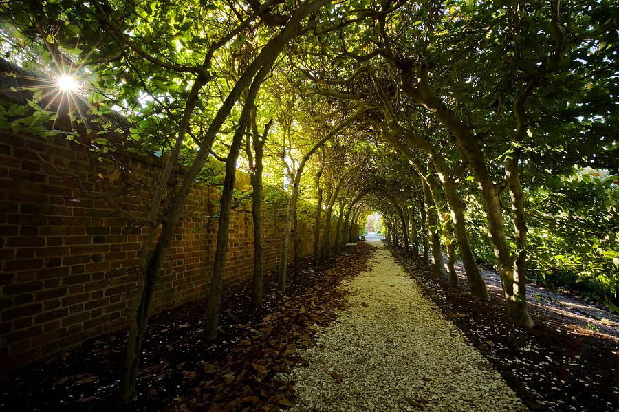 The Palace Arbor in Autumn by Rachel Morrison
