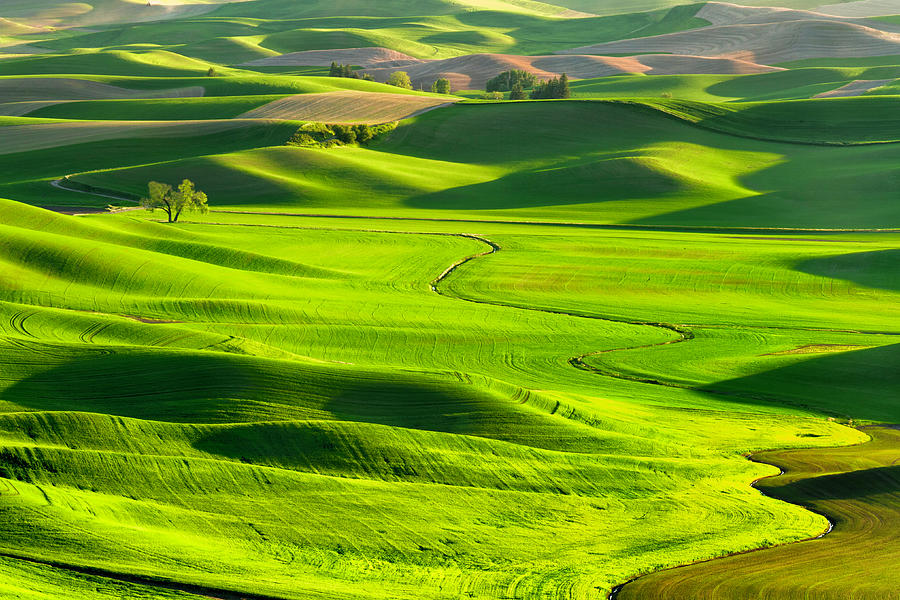 The Palouse Rolling Hills Photograph by Justinreznick
