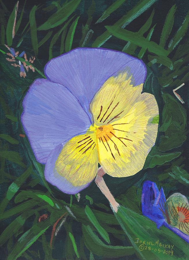 The Pansy by Doriel Mackay