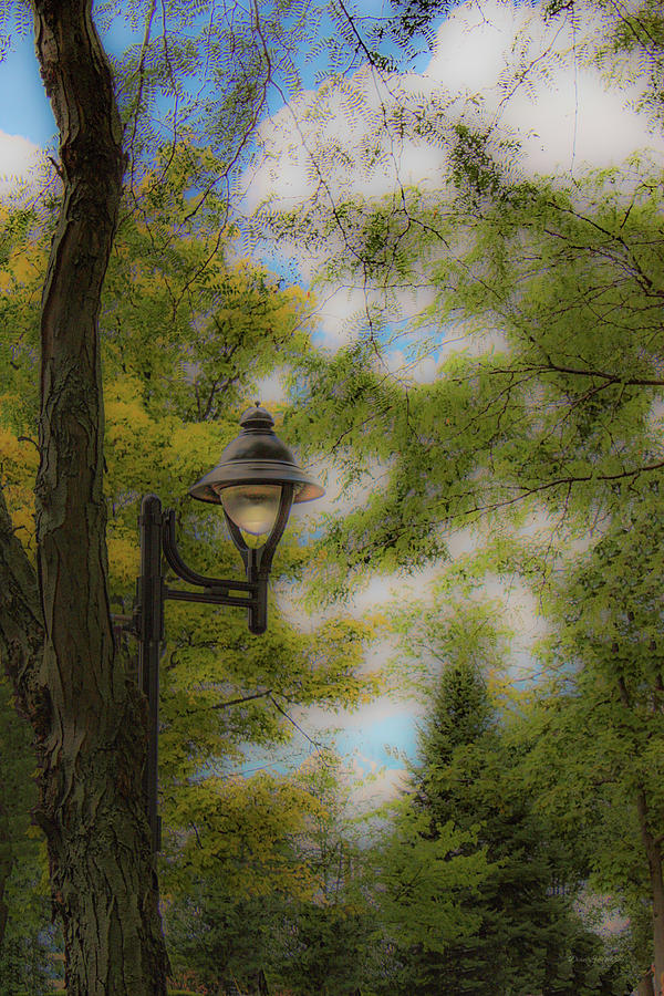 The Park Light by Diane Lindon Coy