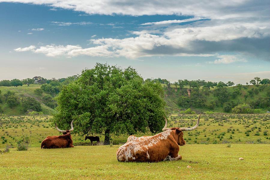 California Photograph - The Pastural Life by Joseph Smith