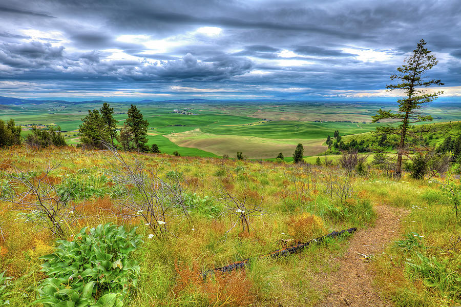 The Path down Kamiak Butte by David Patterson