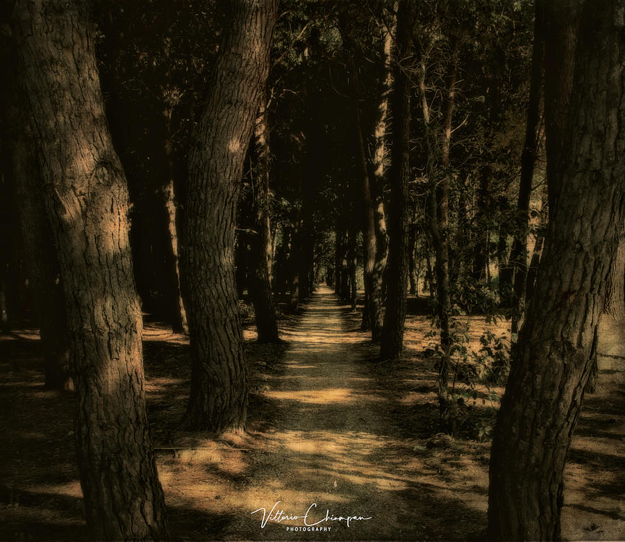 The path by Vittorio Chiampan