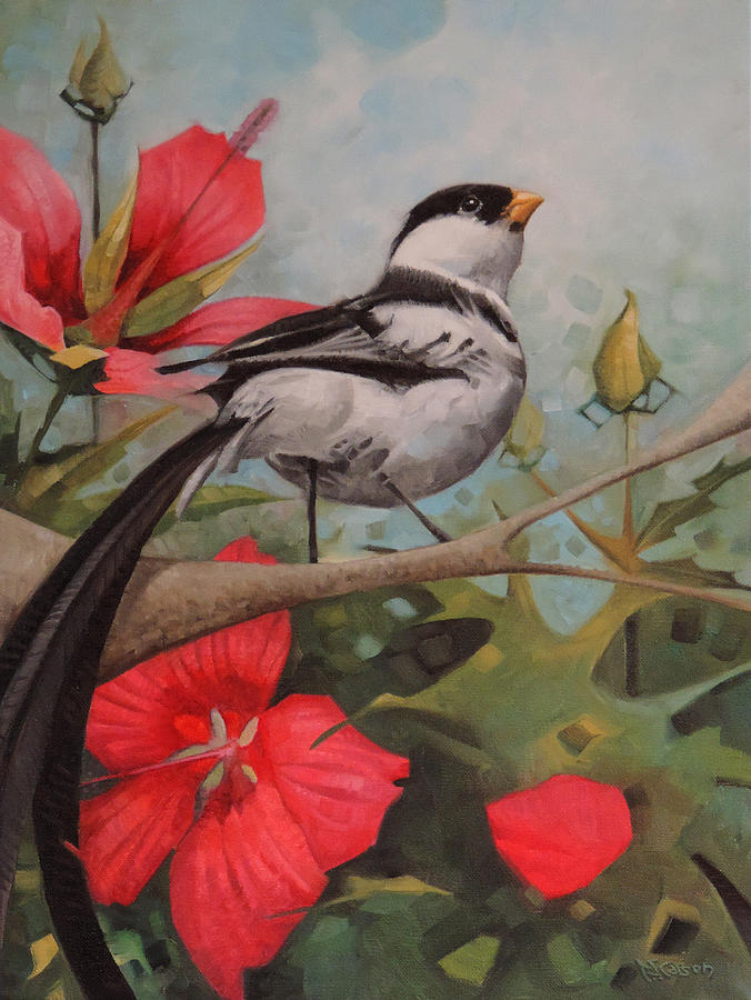 The Pin Tailed Whydah by T S Carson