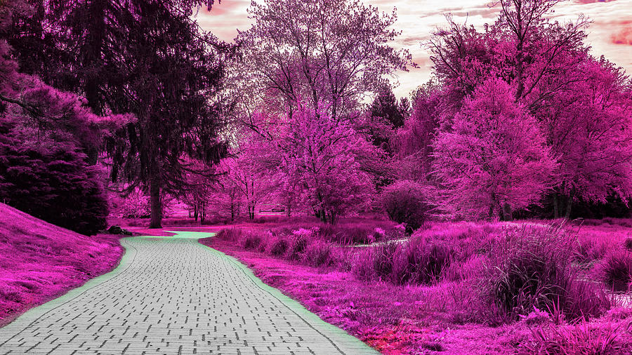 The Pink Rose Gardens by Jason Fink