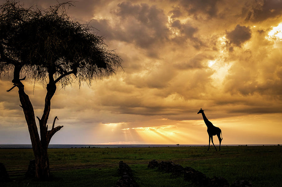 The Plains of Africa by Philip Rispin