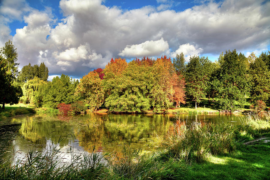 The Pond at the Arboretum by David Patterson