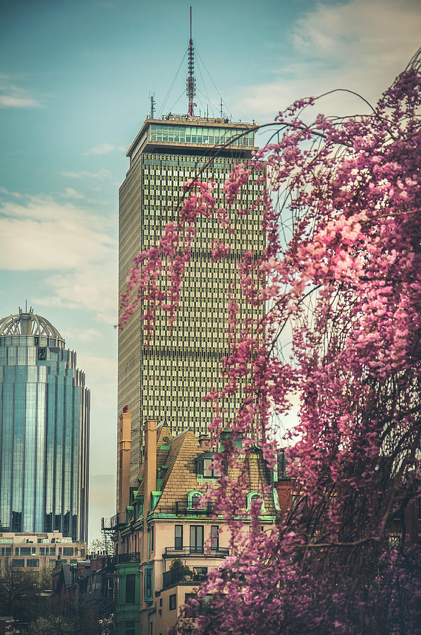 The Prudential Center and Cherry Blossoms by Joann Vitali