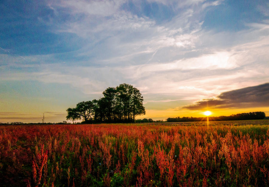 The Red Field by John Harding