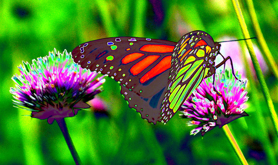 The Red Monarch Butterfly Photograph