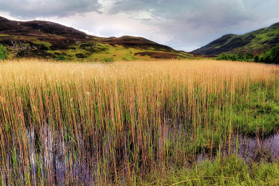 The Reeds of Lochan an Daim - Scotland - Perthshire by Jason Politte