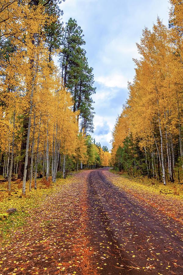 The Road Less Traveled by Rick Furmanek