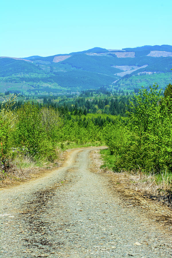 The Road Not Taken by Tikvah's Hope
