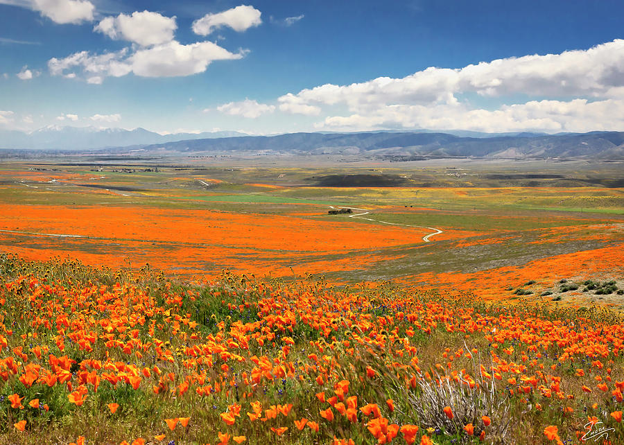 The Road Through The Poppies 1 by Endre Balogh