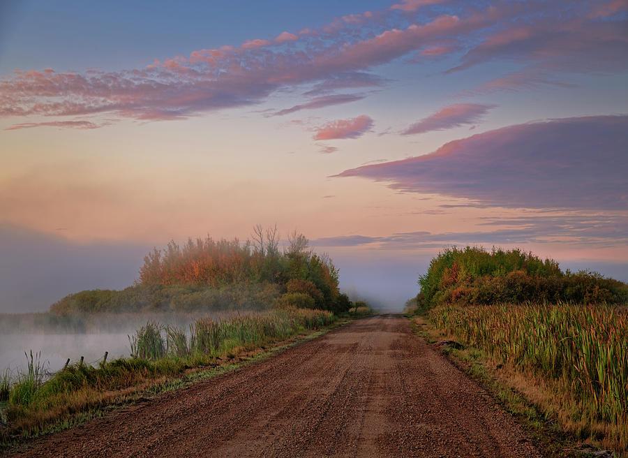The Road Through the Swamp by Dan Jurak