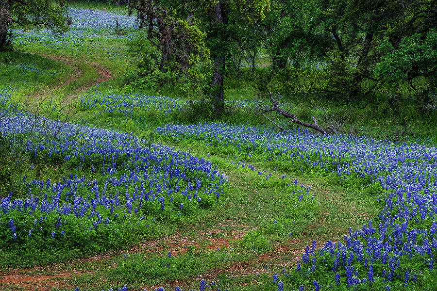 The Road To Bluebonnet Solitude by Johnny Boyd