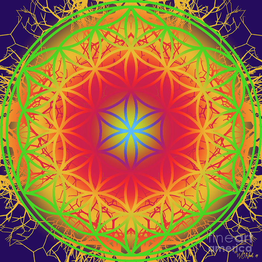 The Flower of Life 1 by Walter Neal