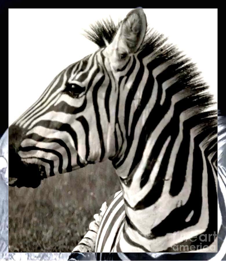 Zebra Digital Art - The Saint by Sharon Green