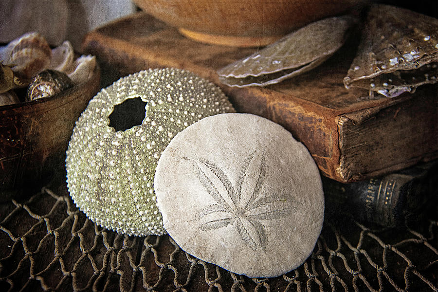 The Sea Urchin and Sand Dollar by Cindi Ressler